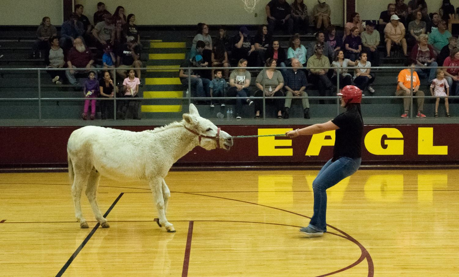 Coach Tuerck attempts to control her donkey.