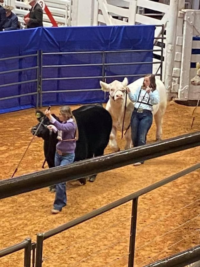 Eighth+grader+Hannah+Bosely+shows+her+cow.